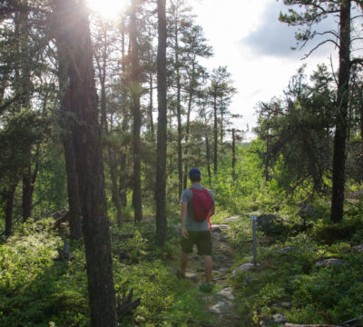 Hiker on trail surrounded by greenery